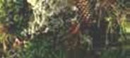 santra i drveće